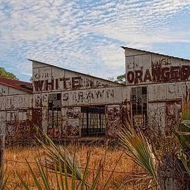 Florida Oranges by Keith Swango