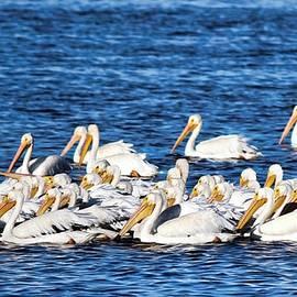 Florida Snowbirds by Barbara Chichester