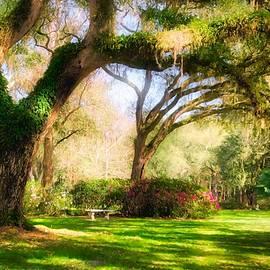 Florida Sunshine by Mel Steinhauer