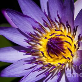 Flower Flames by Sharon Mau