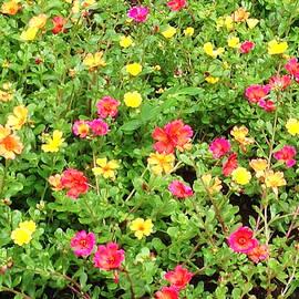 Karen Nicholson - Flower Garden