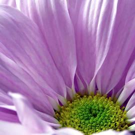 Johanna Hurmerinta - Flower Macro Beauty