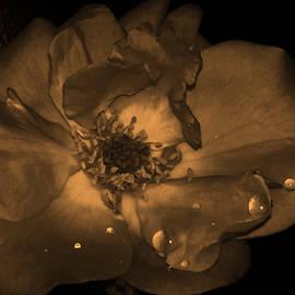 Nilu Mishra - Rose