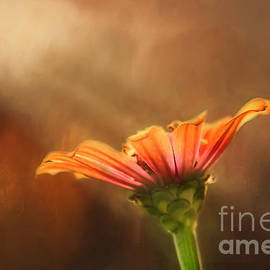 Darren Fisher - Flower of Fall