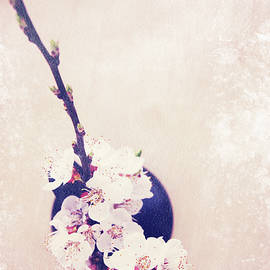 Iuliia Malivanchuk - Flowering branch of apricot