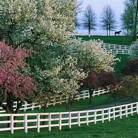 Melissa Farlow - Flowering Crab Apple Trees Bloom