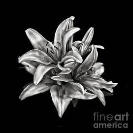 Walt Foegelle - Flowers 8449