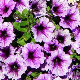 Chuck Kuhn - Flowers Alaska July