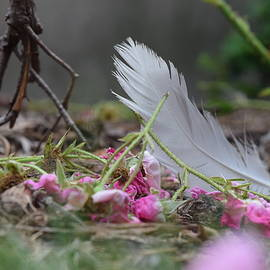 Flowers and Feather by Airestudios Photography