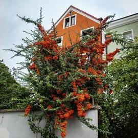 Orange by Andrew Wilson