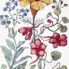 Flowers from From Histoire des Insectes de l