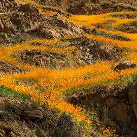 Susan Eileen Evans - Flowing Flowers