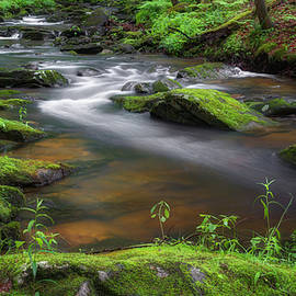 Flowing Spring Stream by Bill Wakeley