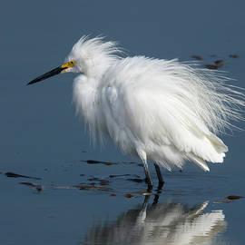 Fluffy Egret by Bruce Frye