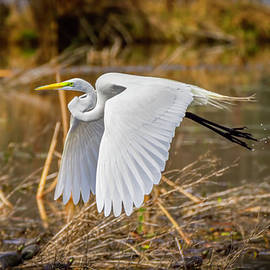 Flying Egret and Turtles by LeeAnn McLaneGoetz McLaneGoetzStudioLLCcom