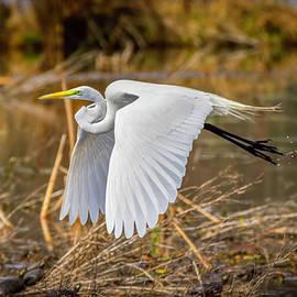 LeeAnn McLaneGoetz McLaneGoetzStudioLLCcom - Flying Egret and Turtles