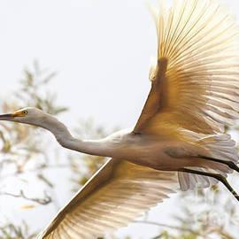 Jerry Cowart - Flying Egret