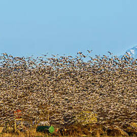 Marv Vandehey - Flying Flock Farm Mountain