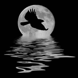 Flying Hawk 1 by Shane Bechler