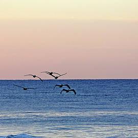 Debbie Oppermann - Flying Low At Manasota Key