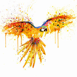 Flying Parrot watercolor by Marian Voicu
