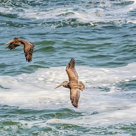 Flying Pelicans by Marv Vandehey