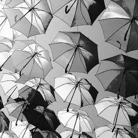 Flying Umbrellas by Stacey Marshall