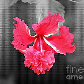 Diann Fisher - Focal BW Red Hibiscus Multilayered