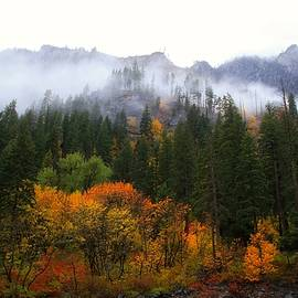 Lynn Hopwood - Fog and rain in Leavenworth
