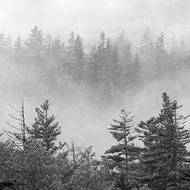 Fog in Pine Woods by Jerry Griffin