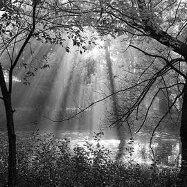 Fog Rays by Betsy Zimmerli