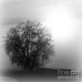 Fog Tree by Barbara Henry