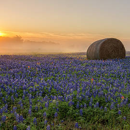 Foggy Bluebonnet Sunrise - Independence Texas by Brian Harig