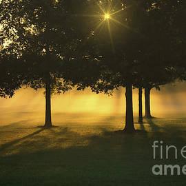 Rachel Cohen - Foggy Burst of Morning