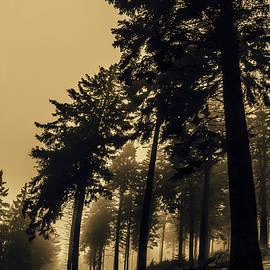 Foggy Forest by Mah FineArt