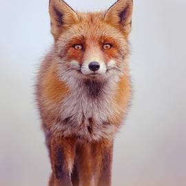 Foggy Fox by Roeselien Raimond