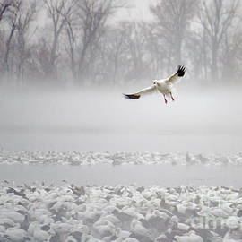 Foggy Landing by Kevin Anderson