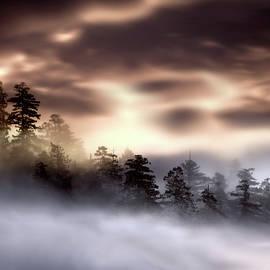 Lilia D - Foggy landscape