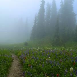 Foggy morning at Tipsoo by Lynn Hopwood