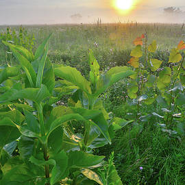 Ray Mathis - Foggy Sunrise in Glacial Park West