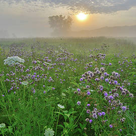 Ray Mathis - Foggy Sunrise on Wildflowers of Glacial Park