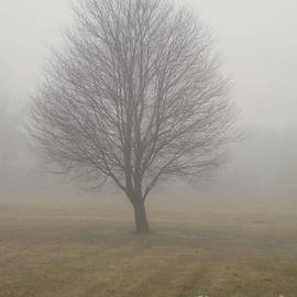 Ann Horn - Foggy Winter Morn