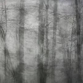 Francis Sullivan - Foggy Winter Woods