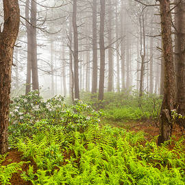 Bill Swindaman - Foggy Woodland Scene - West Virginia Mountains with Ferns and Blooming Laurel
