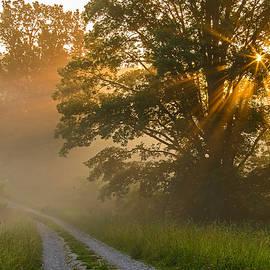Ulrich Burkhalter - Fogy summer morning