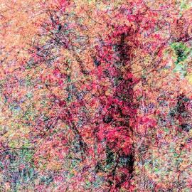 Janice Drew - Foliage Composite