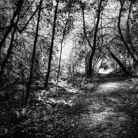 Mikko Haapala - Follow the light