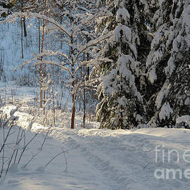 Kerstin Ivarsson - Footpath in a snowy forest on a sunny winter day.