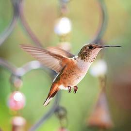 Lynn Bauer - For the Love of Hummingbirds