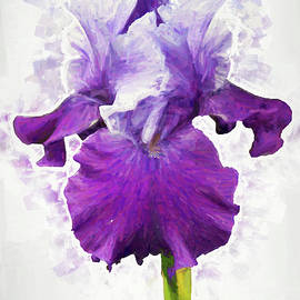 Marcia Colelli - For The Love Of Irises